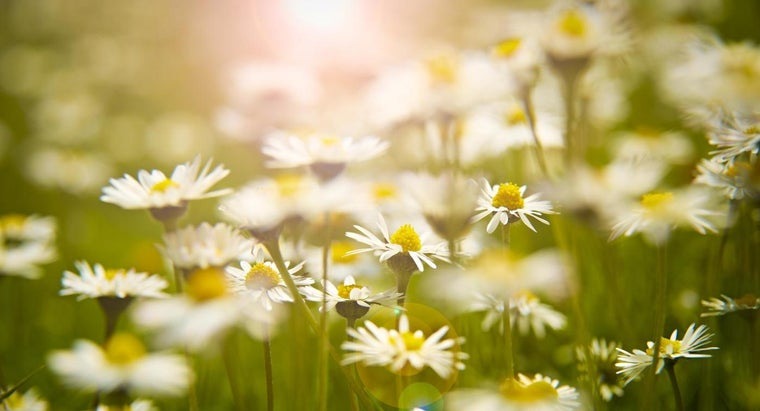 time-plant-daisies