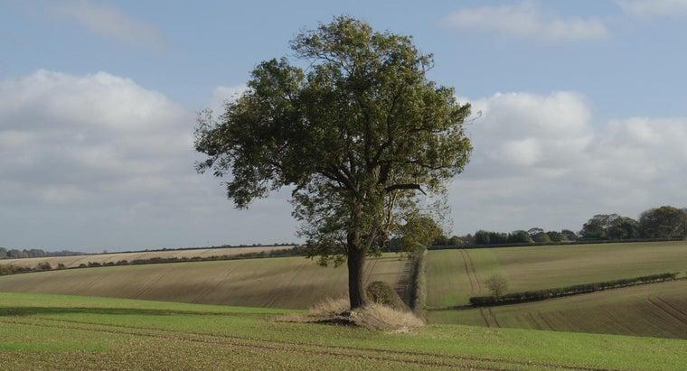 time-prune-ash-tree