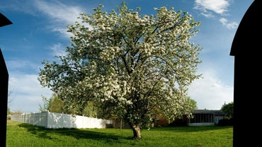 When Is the Best Time to Spray Apple Trees?