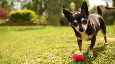 What Are Some Tips for Attending an Off-Leash Dog Park?