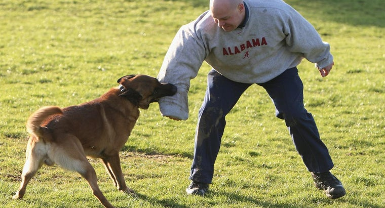 tips-german-shepherd-attack-training
