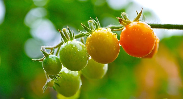 tips-hanging-tomato-plants