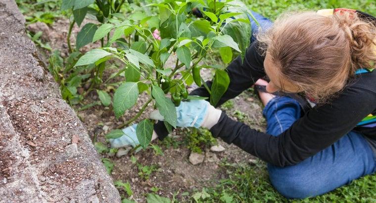 tips-using-vinegar-organic-weed-killer