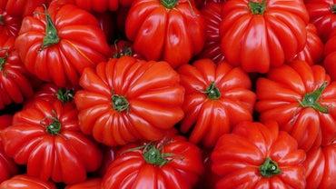 When Is Tomato Planting Season?
