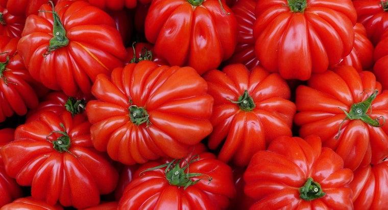 tomato-planting-season