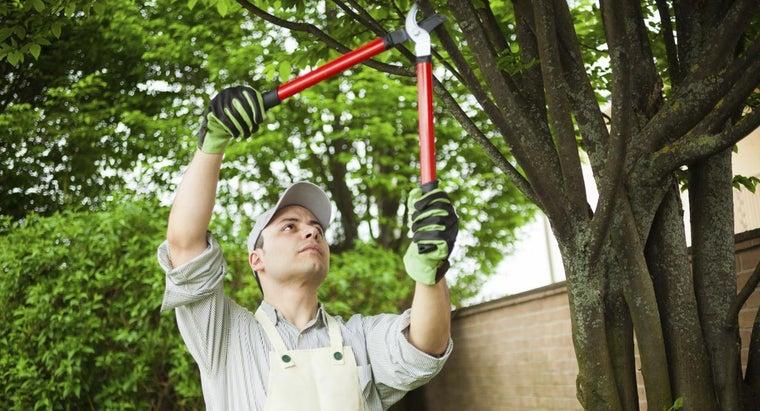 tools-use-prune-large-trees