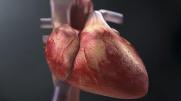 How Do You Trace the Flow of Blood Through the Heart?
