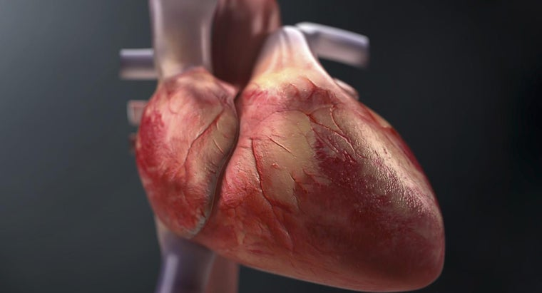 trace-flow-blood-through-heart