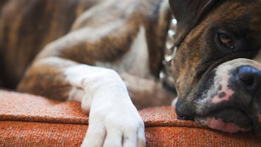 How Do You Treat Dog Diarrhea?