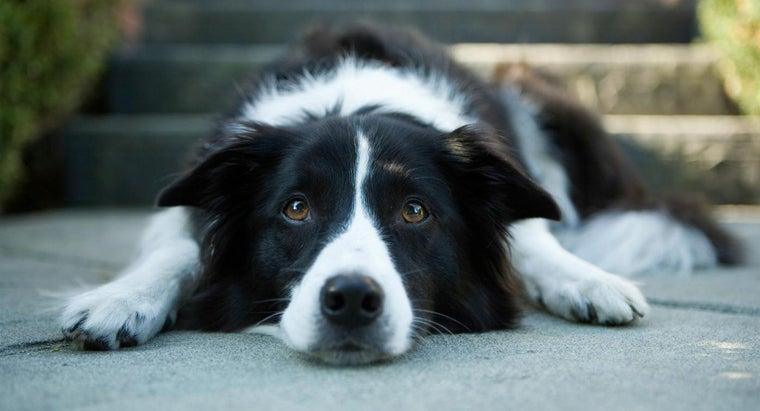 treat-dog-s-upset-stomach