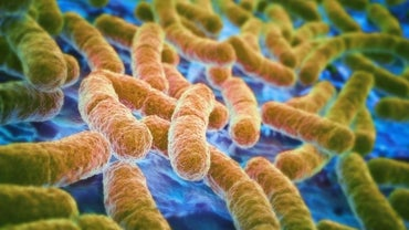 How Do You Treat an E. Coli Urinary Tract Infection?