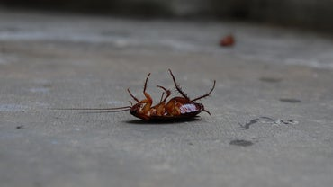 How Do You Treat a Home for Roaches?