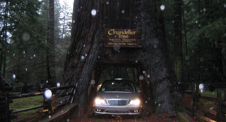 tree-can-drive-through