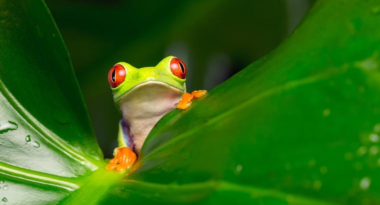tree-frogs-live