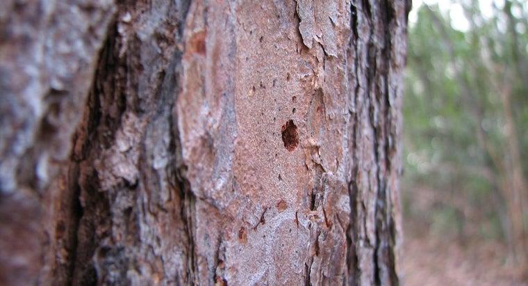 trees-bark-damage-healed