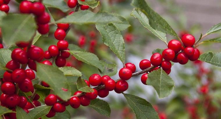 trees-berries