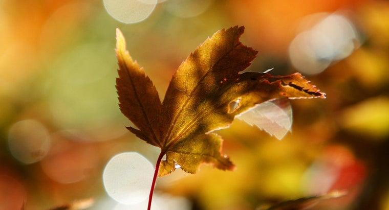 trees-need-leaves