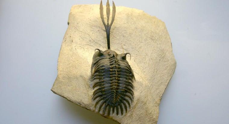 trilobites-considered-index-fossils