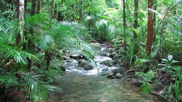 What Are Tropical Rainforest Landforms?