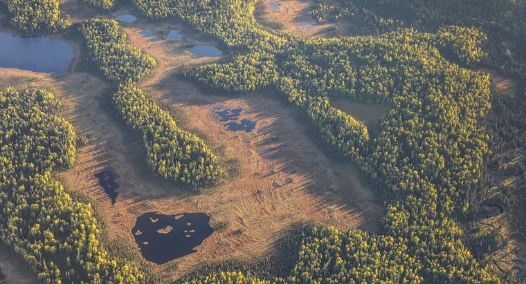 tundra-vegetation