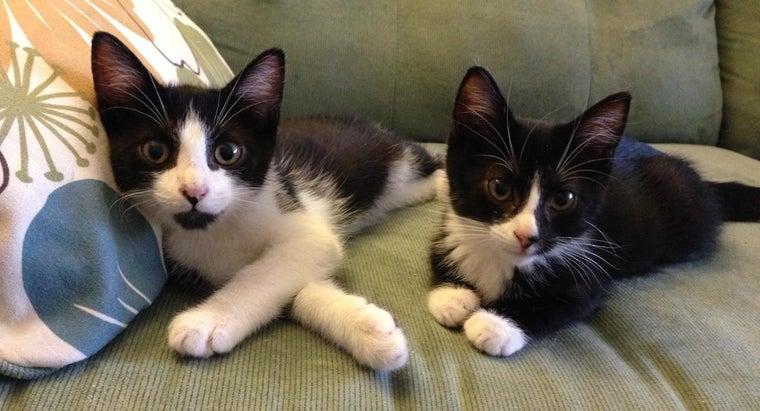 twin-cat-names
