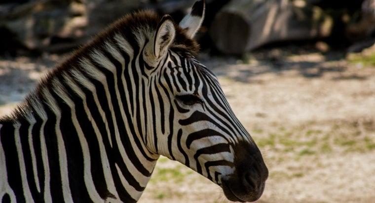 two-animals-make-zebra