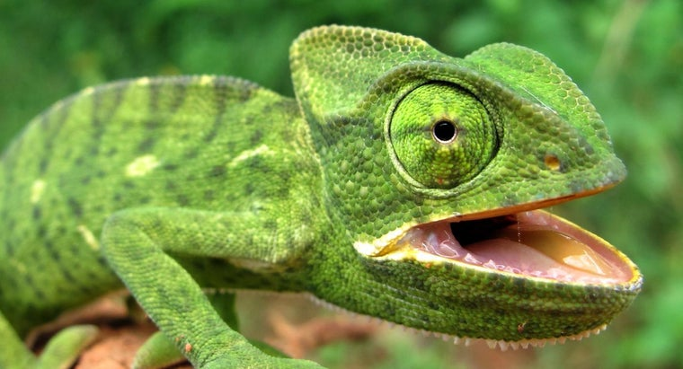 type-body-covering-reptiles