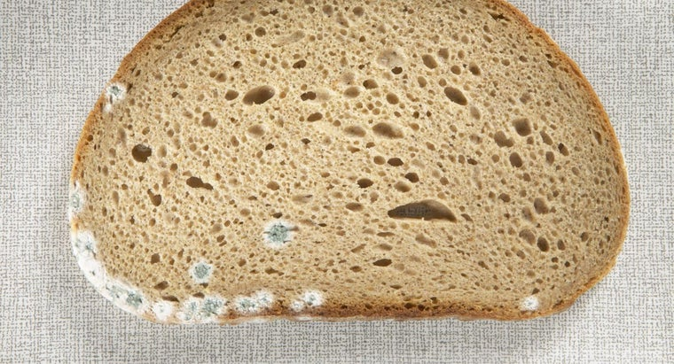 type-bread-molds-fastest