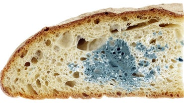 Which Type of Bread Molds the Fastest?