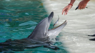 What Type of Fish Do Dolphins Eat?