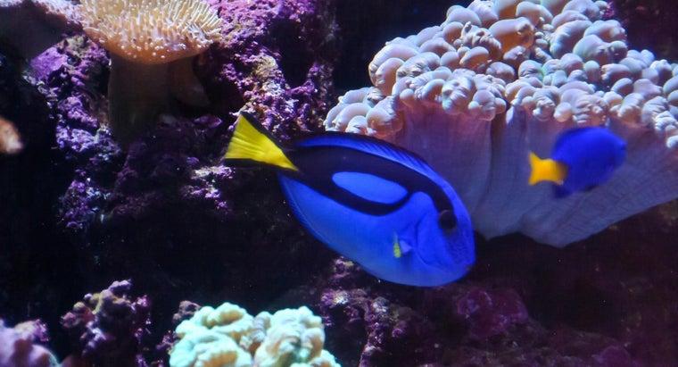 type-fish-dory-finding-nemo