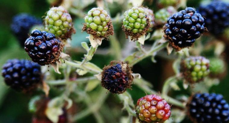 type-mulch-blackberries