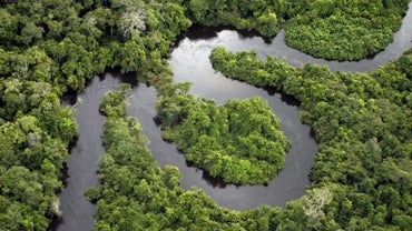 What Types of Bodies of Water Are Found in a Tropical Rainforest?