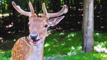 What Types of Foods Do Deer Eat?