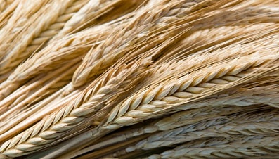 What Are Some Types of Whole Grain Foods?
