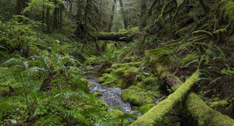 types-plants-tropical-rainforests