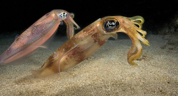 types-squids