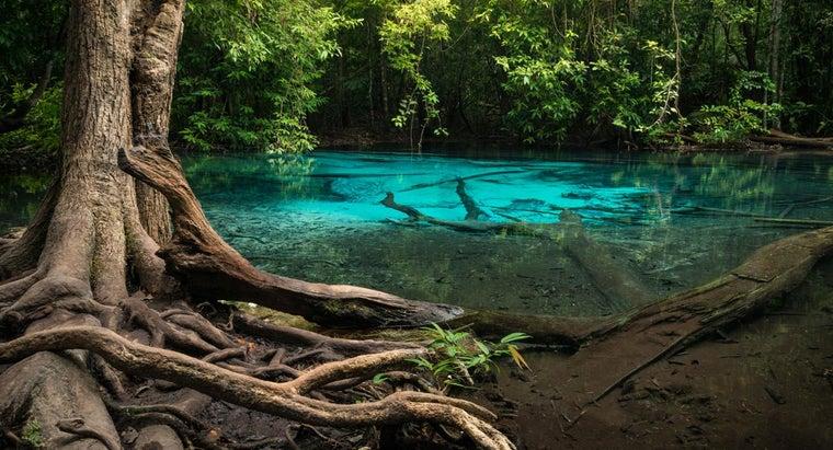 types-trees-rainforest