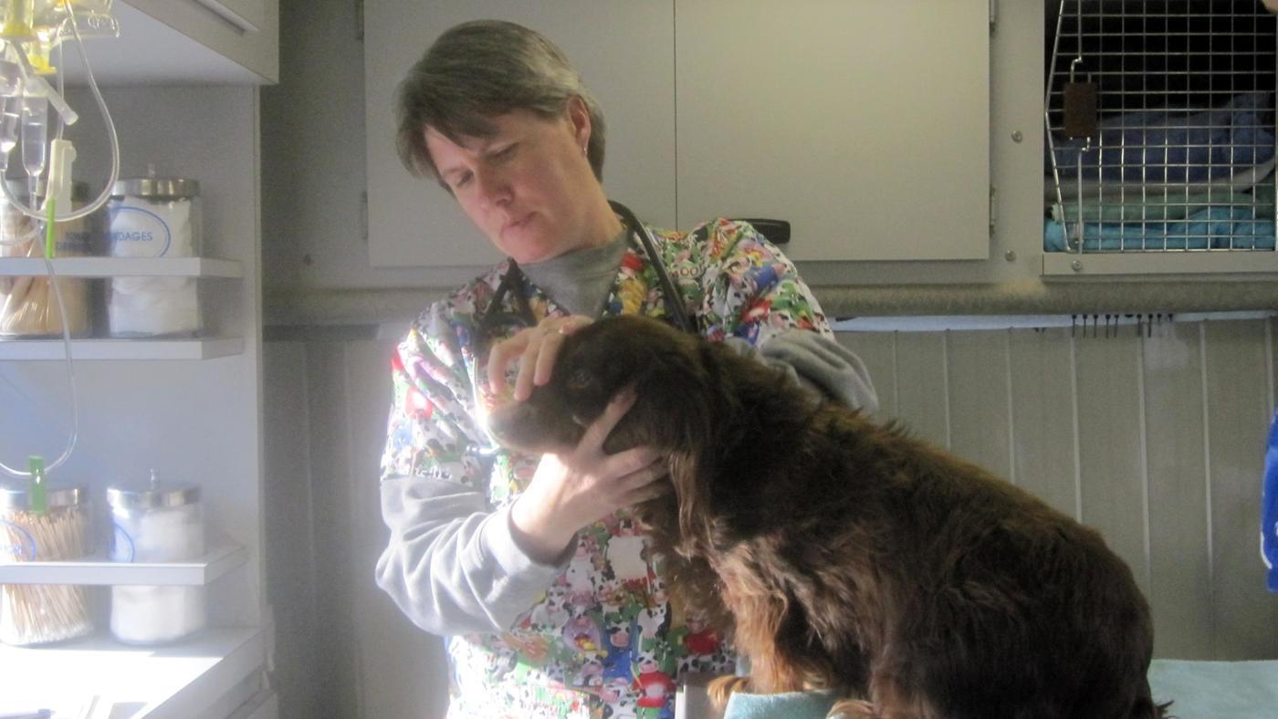 Veterinarian,veterinarian near me,veterinarian salary,how much do veterinarians make,emergency veterinarian
