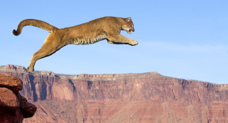 typical-habitat-mountain-lion