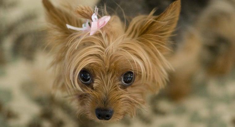 unique-girl-puppy-names