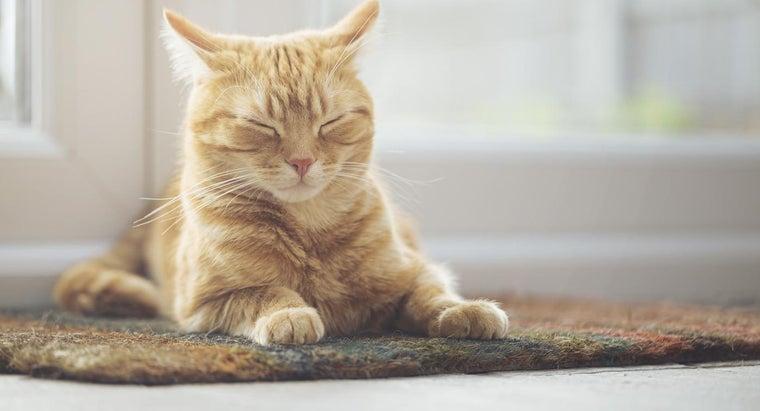 unique-male-cat-names