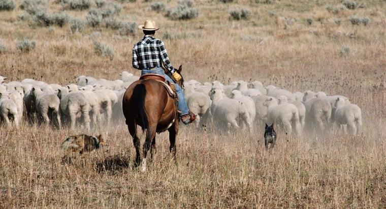 use-shepherd-s-whistle