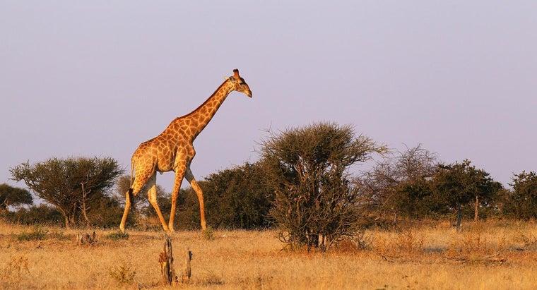veld-south-africa
