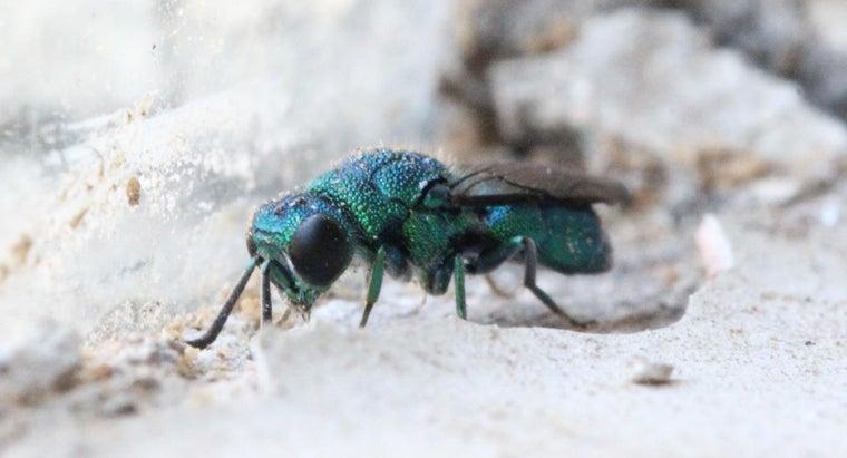 wasps-die-winter