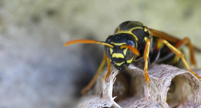 wasps-live