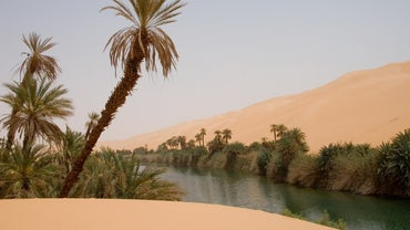How Do You Find Water If You're Stranded in the Desert?