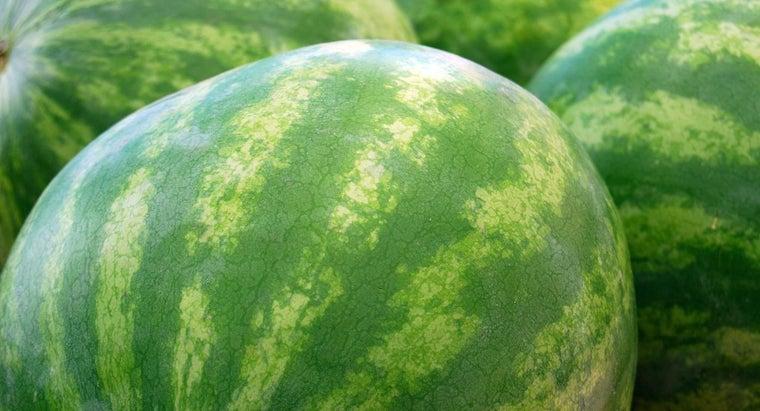 watermelon-grow