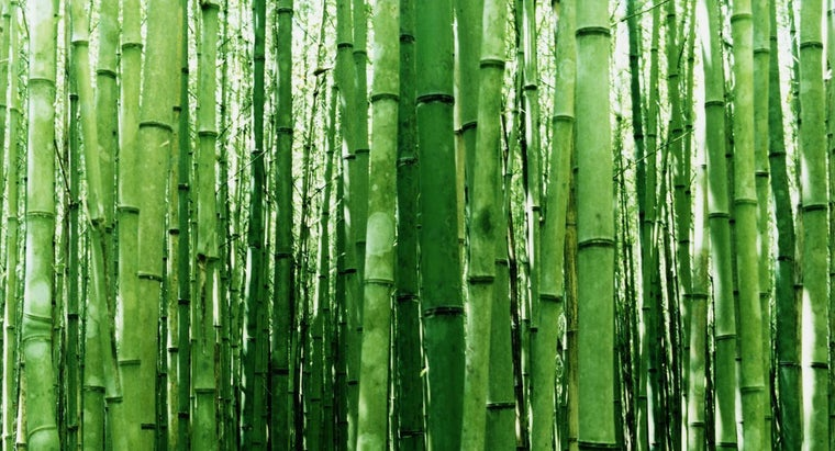 way-cut-bamboo