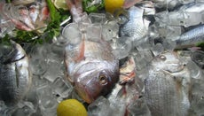 What Is the Best Way to Thaw Frozen Fish?